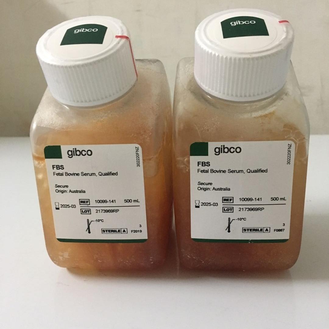 GIBCO南美胎牛血清10270-106