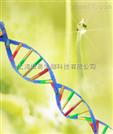 miRNA分离纯化试剂盒