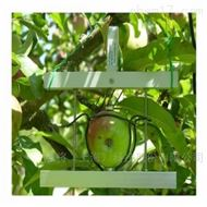DF水果蔬菜生长测量传感器
