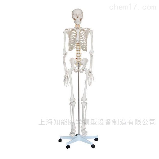180cm人体骨骼模型