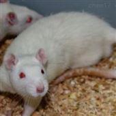 胰腺炎模型大小鼠實驗