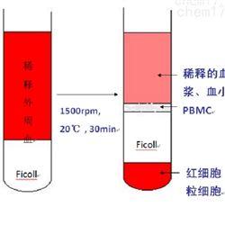 外周血分离PBMC实验