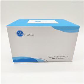 Human ACHE ELISA试剂盒