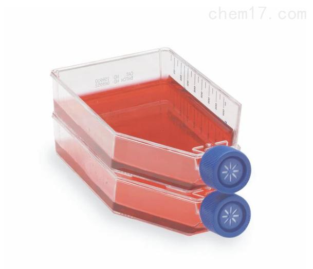 赛默飞175细胞培养瓶