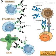 肿瘤免疫靶点   CTLA-4