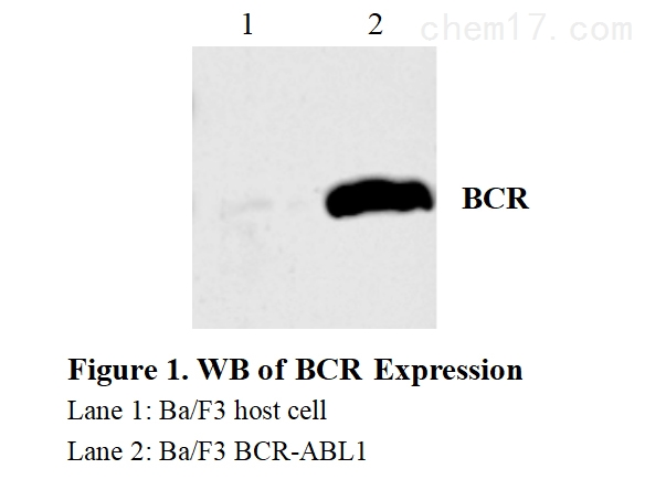 CBP73001 WB.jpg