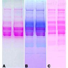 786-254G-biosciences 糖蛋白染色试剂盒