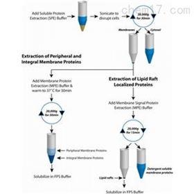 786-018G-biosciences FOCUS蛋白质分级分离试剂