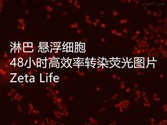 Advanced DNA RNA转染试剂