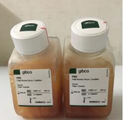 GIBCO澳洲胎牛血清