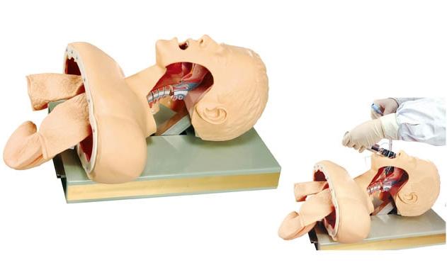 氣管插管訓練模型